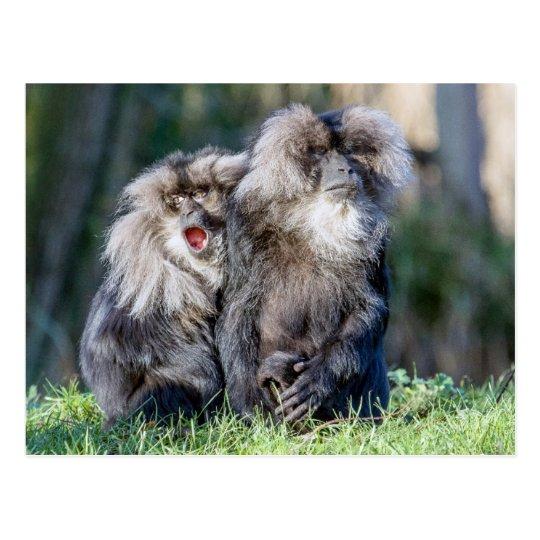 ライオン後につかれたマカク属猿...