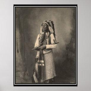 インディアン 野生 インディアン...