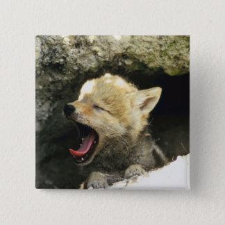 あくびをしているコヨーテの子犬 5.1CM 正方形バッジ