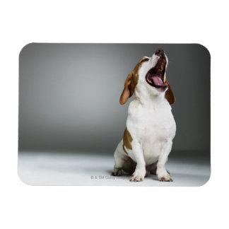 あくびをしている混合された品種犬クローズアップ マグネット