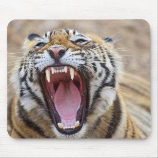 あくびをしている王室のなベンガルトラ; Ranthambhor マウスパッド