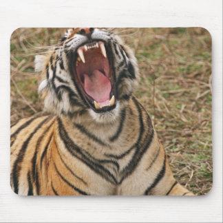 あくびをしている王室のなベンガルトラRanthambhor マウスパッド