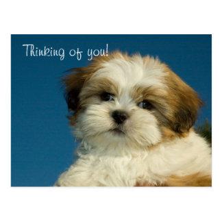 """あなたのシーズー(犬)のTzuの子犬""""考えること""""郵便はがき ポストカード"""