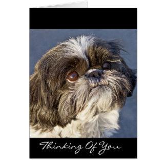 あなたのシーズー(犬)のTzuの考えること挨拶状-詩 カード