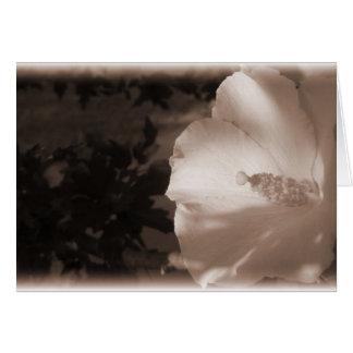 あなたのセピア色の花に考えること カード