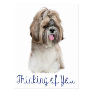 あなたの考えることシーズー(犬)のTzuの小犬こんにちは ポストカード