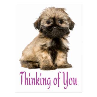 あなたの考えることシーズー(犬)のTzuの小犬の郵便はがき ポストカード
