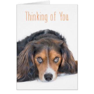 あなたの考えること-感情的な目を持つ美しい犬 カード