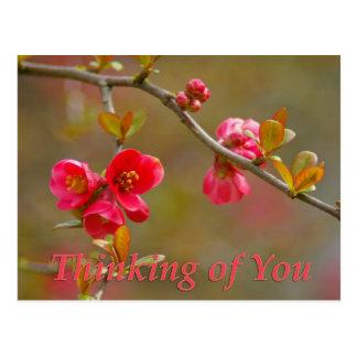 あなたの花盛りのマルメロの考えること郵便はがき ポストカード