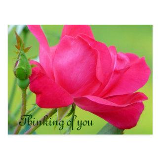 あなたの赤紫のピンクのバラか考えること ポストカード