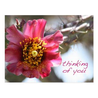 """あなたのChollaの花""""考えること"""" ポストカード"""