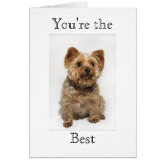 あなたはかわいい犬最も最高のなカード カード