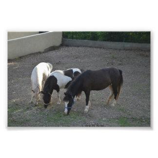 あなたへのおはよう写真: 大人のミニチュア馬 フォトプリント