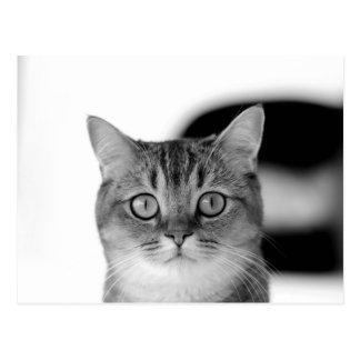 あなたをまっすぐに見ている白黒猫 ポストカード