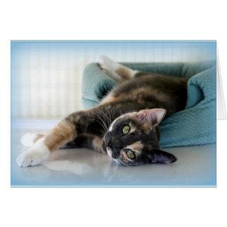 あなたを熟視しているTortie愛らしい猫 カード