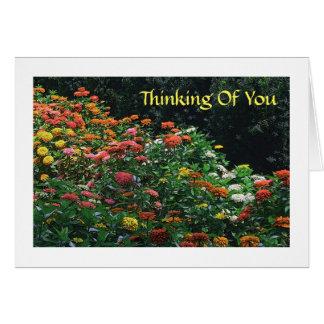 """""""あなた""""の考えること/COLORFULの《植物》百日草GARDEN/PHOTOG. カード"""
