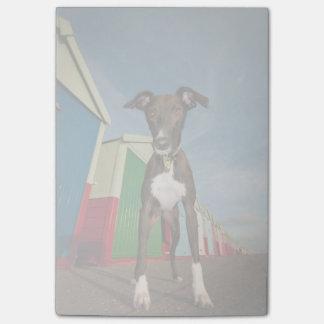 あるビーチ小屋の前に立っているラーチャー ポストイット