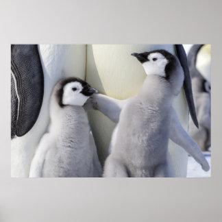 いけないコウテイペンギンのひよこ ポスター