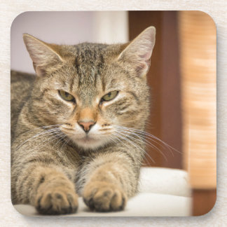 いけない猫 コースター