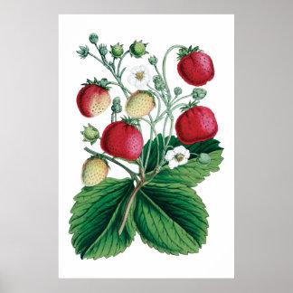 いちごの植物のプリント ポスター