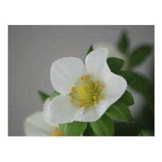 いちごの花 ポストカード