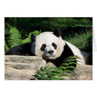 うたた寝しているジャイアントパンダ カード