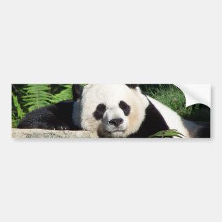 うたた寝しているジャイアントパンダ バンパーステッカー