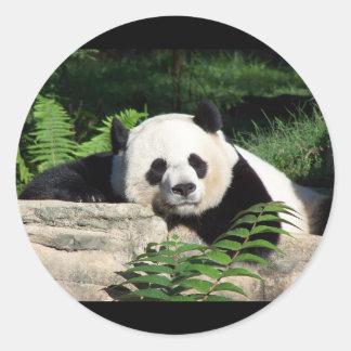 うたた寝しているジャイアントパンダ ラウンドシール