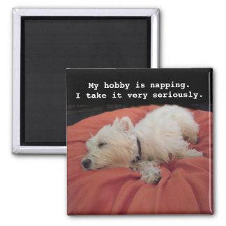 うたた寝のWestieの写真の磁石 マグネット