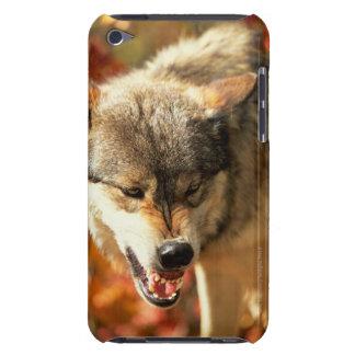 うなるオオカミのポートレート Case-Mate iPod TOUCH ケース