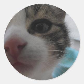 おせっかいな子ネコ ラウンドシール