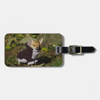 おもしろいでスタイリッシュな服を着せられたチワワの子犬 ラゲッジタグ
