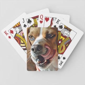 おもしろいで空腹なビーグル犬のハウンドドッグ トランプ