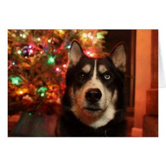 おもしろいなシベリアンハスキーのクリスマスカード カード