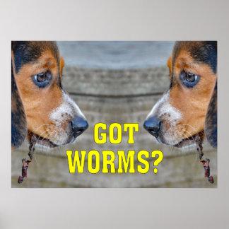 おもしろいなビーグル犬の子犬によって得られるみみずか。 ポスター