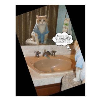 おもしろいな猫の断言 はがき