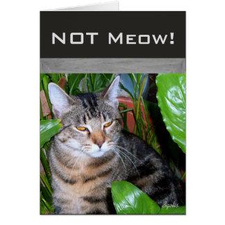 """おもしろいな表現の""""ない猫の鳴き声""""猫のメッセージカード カード"""
