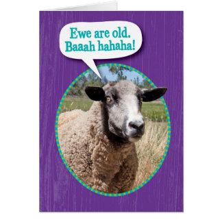 おもしろいな雌ヒツジの古いヒツジの打撃の誕生日 カード
