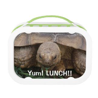 おもしろいのカメの食べ物の昼食 ランチボックス