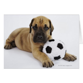 おもちゃのサッカーボールを持つグレートデーンの子犬 カード