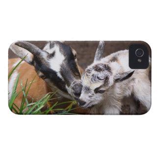 お母さんおよびベビーのヤギ Case-Mate iPhone 4 ケース