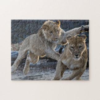 お母さんが付いている若いライオンの演劇 ジグソーパズル