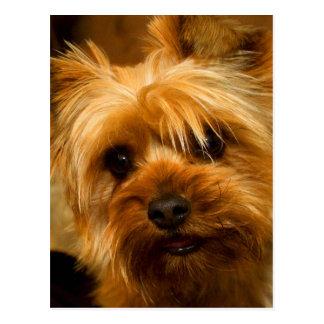 お母さん愛ヨークシャーテリアテリア犬のための待ち時間 ポストカード