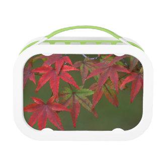 かえでの葉、Katsura、京都、日本 ランチボックス