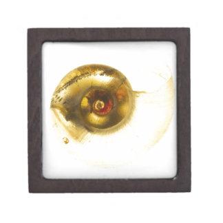 かたつむりの貝 ギフトボックス
