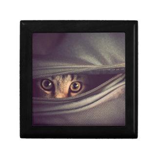 から見ている若い虎猫の子ネコはバッグのファスナーを締めます ギフトボックス