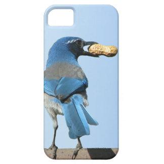 かわいいアオカケス鳥及びピーナツiPhone 5の場合 iPhone SE/5/5s ケース