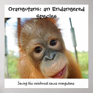 かわいいオランウータンの絶滅寸前の野性生物種 ポスター