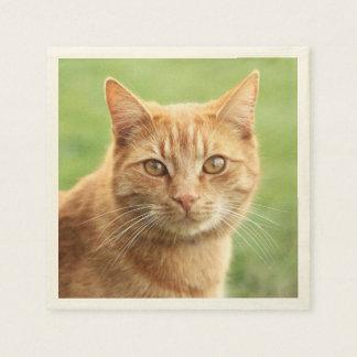 かわいいオレンジ猫のポートレート スタンダードカクテルナプキン