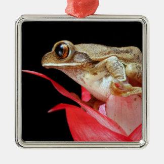 かわいいカエルは赤い花の写真のオーナメントでとまりました メタルオーナメント